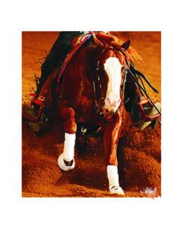 Pferd/Horse